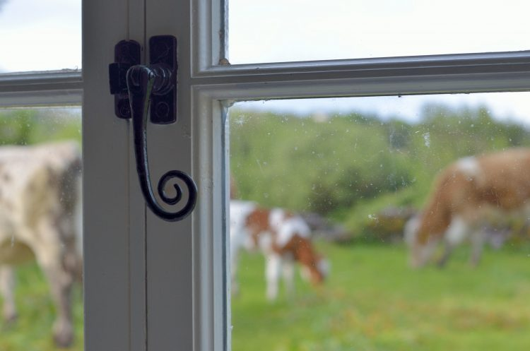 cows and window